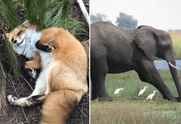 In Honor Of World Animal Day This Video Shows Us That All Animals