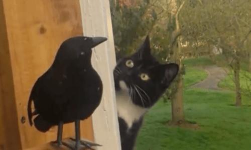 Rencontre entre félins! [PV Kot] Fake-Raven-Creates-Hours-Of-Studying